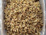 批发一级淡晒蛤蜊干 海鲜干货新货无沙 20斤整箱批发
