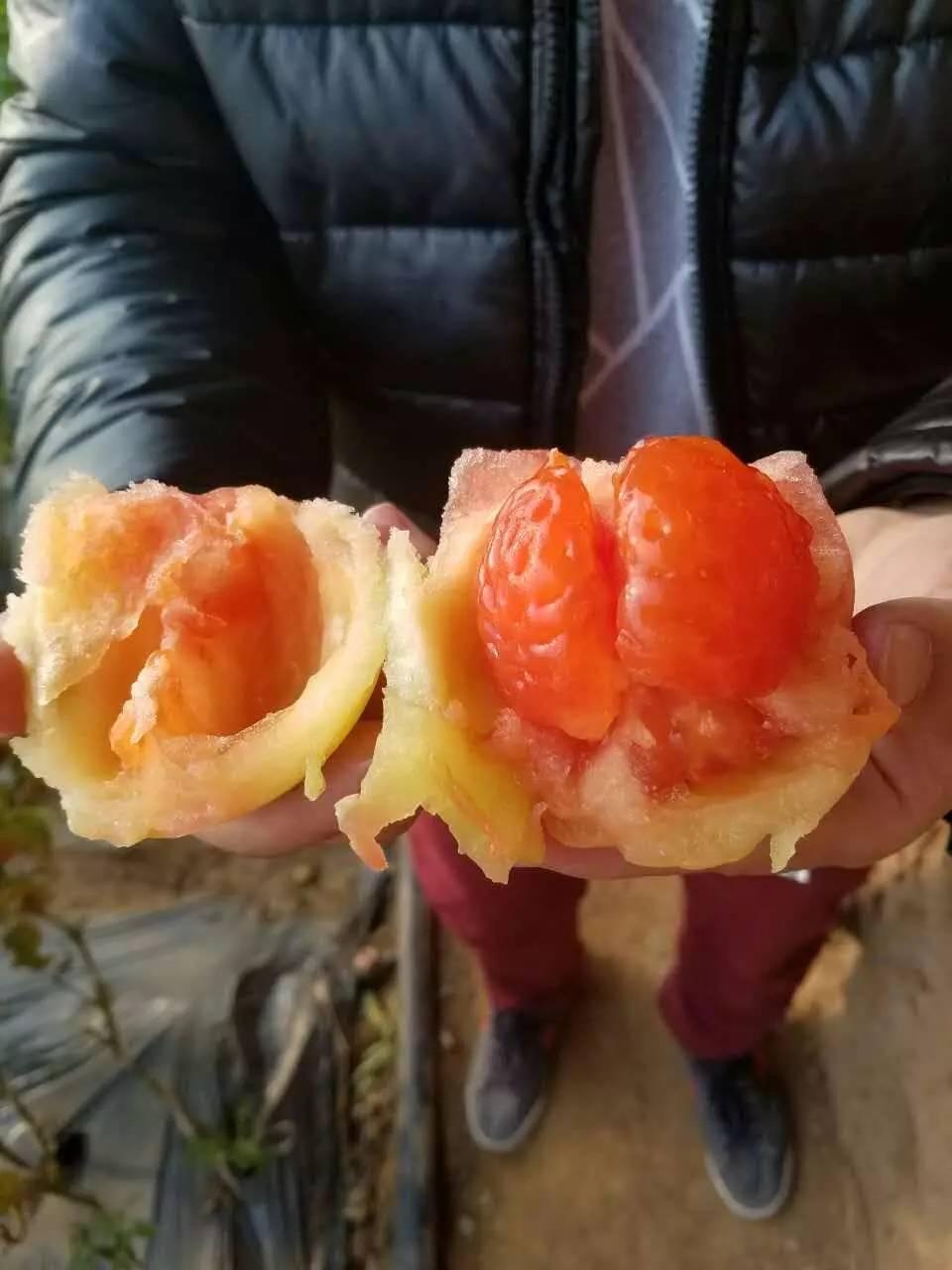 满城富硒红颜草莓采摘一日游