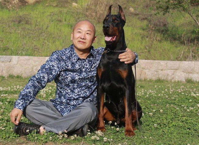 深圳哪里有健康杜宾犬买 广东地区最顶端杜宾基地