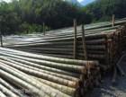 廊坊绿化支撑杆,竹竿 杉木杆 松木杆 防腐木