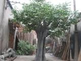 枫林仿真园艺 椰子树
