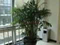 广州鲜花植物租赁绿植租摆园艺园林绿化花卉景观养护
