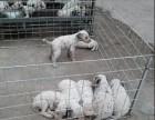 北京什么地方有狗场卖宠物狗/北京哪里有卖斑点狗犬