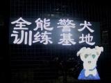 深圳工作犬宠物狗训练基地