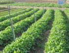 沈丘县域大面积优质耕地,适合集约化种植经营