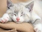 养宠的好处养宠物的坏处,养猫好不好?为什么养宠物 友只宠物