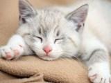 养宠的好处养宠物的坏处,养猫好不好 为什么养宠物 友只宠物