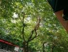 广东横沥沙县小吃低价转让