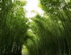 河南周边避暑景区 来洛阳神灵寨感受大自然的24度