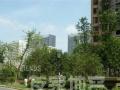 绿地海顿公馆+简装两房+价格便宜+可做饭+独立卫生间