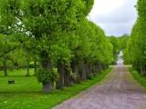专业市政道路绿化