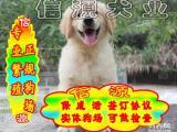 买纯种健金毛犬 赠送用品 - 签质保协议
