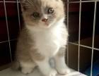 蓝白,蓝猫,加菲宝宝找新家