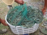 苏州对虾饲料厂家 南美白对虾饲料厂家 甲鱼饲料厂家