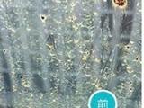 玻璃划痕修复,钢化玻璃划痕修复,