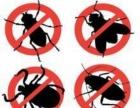 保定灭鼠 灭蟑螂服务 专业灭鼠灭蟑螂 全年无忧