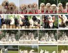 出售世界各種名犬一名貓一包純種一全國支持貨到付款