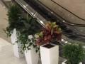 杭州办公室绿植出租室内盆景租摆植物租赁养护花卉租赁