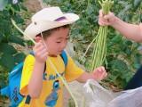 农家乐野炊做饭采摘体验乡村生活