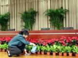 苏州金阊花卉租摆公司