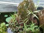 紫金苑农家乐,休闲避暑假日游