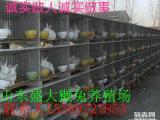 养殖兔子求种兔价格