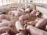 育肥猪怎样长的快 优农康猪饲料添加剂专业