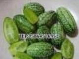 拇指西瓜种子 墨西哥酸黄瓜 蔬菜种子