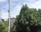 洋丹工业园区96号 住宅底商 180平米