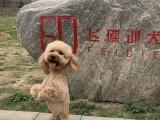 輕松擁有乖狗狗,專業的訓犬技術讓您和愛犬更好的溝通