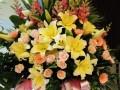 中山鲜花店开张花篮预订会议鲜花速递室内绿植批发