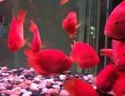 专业清洗鱼缸实体店出售观赏鱼鱼缸租摆维护托管服务