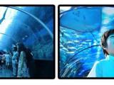 忻州约尼纳极地海洋馆门票,2020忻州海洋馆门票包含项目