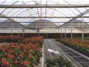 保温性能好的温室大棚_花卉连栋温室报价