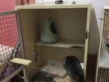 三只龙猫+标笼低价出售