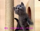 大连哪里有只给你最好最健康的爱宠 金吉拉蓝猫布偶等品种齐全
