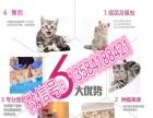 家族猫舍专业繁殖精品猫咪可加微信挑选可送货上门