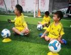 幼儿体智能足球小象足球