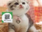 天津哪里开猫舍卖折耳猫 去哪里可以买得到纯种折耳猫