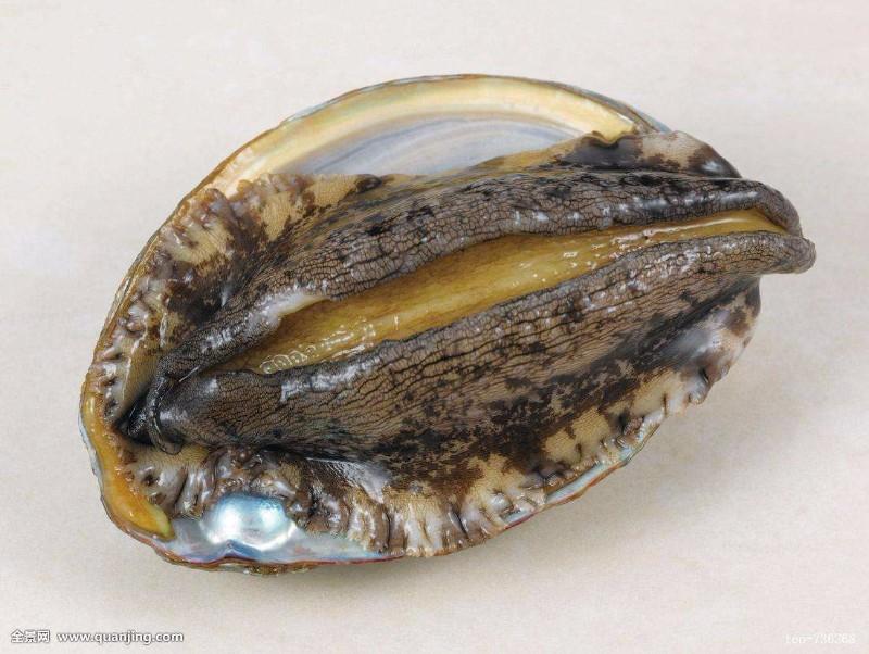巢湖鲍鱼产品进口流程报价