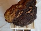 野生白桦茸4斤 桦褐孔菌/桦树泪 2000一块 黑龙江大兴安岭特产