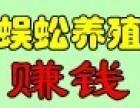 东方九号蜈蚣养殖加盟
