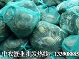 阳澄湖大闸蟹多少钱