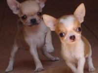 苏州什么地方有狗领养 苏州宠物赠送领养