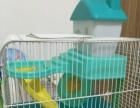 宠物航空箱仓鼠笼子甩了