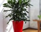 辦公室植物盆景租賃!