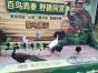 百鸟展公司常年出租百鸟园布置清单鸟艺演出鹦鹉表演秀