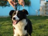 南京溧水寵物訓練 專業訓犬超大場地