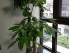南昌红谷滩植物租花绿植租摆首选专业办公室花卉租赁价格实惠