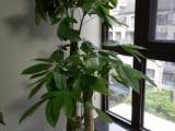 南昌红谷滩植物租花绿植租摆专业办公室花卉租赁价格实惠
